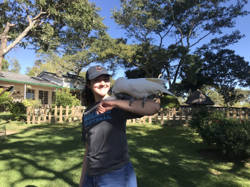 Conservation Internships in Zimbabwe